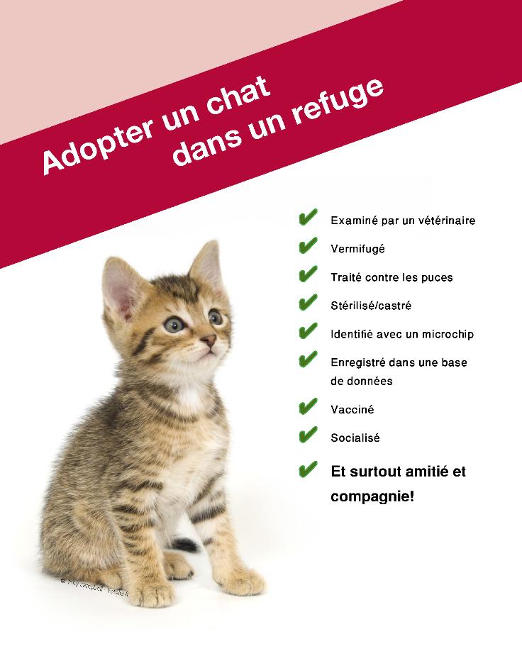 site chat gratuit belgique tournai